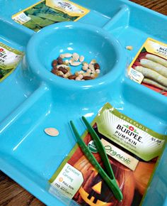 seed tray for preschool