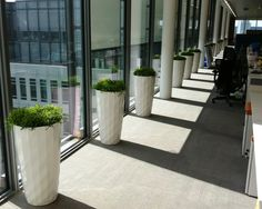 Contemporary planting in London office, using white 'Diamante' Lechuza containers planted with Rhipsalis