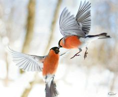 Find images and videos about nature, winter and animals on We Heart It - the app to get lost in what you love. Small Birds, Little Birds, Love Birds, Beautiful Birds, Pet Birds, Nature Animals, Animals And Pets, Bird Feeder Craft, Bird Bath Garden
