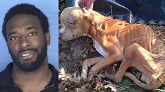 PETITION, PLEASE SIGN AND SHARE! Full prosecution for NFL player that starved dog until it passed away! | YouSignAnimals.org