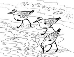 Beach Coloring Pages, Coloring Pages For Grown Ups, Adult Coloring Pages, Free Coloring, Coloring Book, Colouring, Piper Bird, Bird Drawings, Drawing Birds