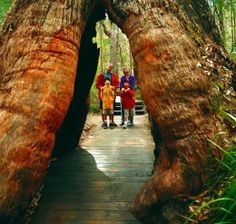Valley of the Giants, Denmark, Western Australia