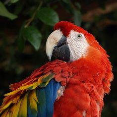 In dit beeld zie je voornamelijk de primaire kleuren, rood geel en blauw.