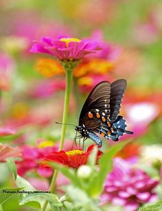 Butterfly In A Colorful Flowers Garden By JacquiTnature