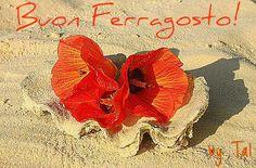 BUON FERRAGOSTO!!!!!!!!!!!!!!!!!!!!!!!!!! fioreostricacw2.jpg
