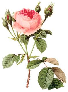N Bouquet di Rose bella immagine digitale di DownloadInspiration