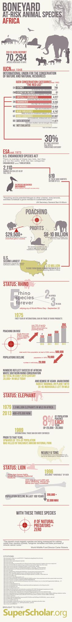 At-Risk Animal Species: Africa [INFOGRAPHIC]