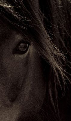 They say you can see the soul of a horse through the eyes... I Believe. #Horse #Equine #Photography by Debbie Marshall