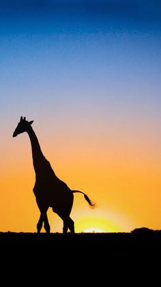 Free iPhone 6 Wallpapers | Giraffe & Sunset