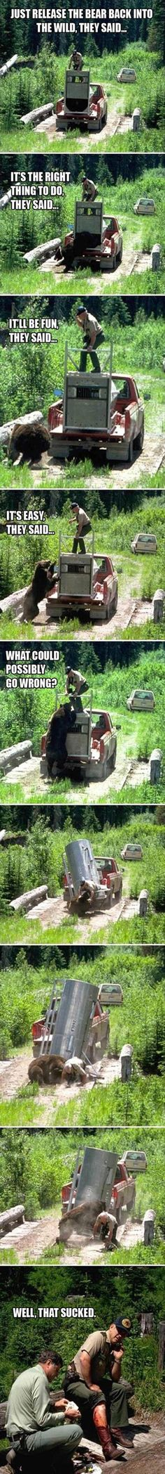 Release the Bear   // funny pictures - funny photos - funny images - funny pics - funny quotes - #lol #humor #funnypictures