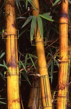DIY Fake Bamboo out of PVC (for terrariums, vivariums,fountains,...)