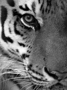 Endangered Animals Picture