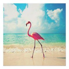 flamingo poster - Google zoeken