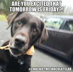 i know previous day is not so good but today i find some lol so True Funny Pictures that can make your day good and happy.Read This Best 22 lol so True Funny Pictures Animal Pictures, Funny Pictures, Tomorrow Is Friday, Halloween Jokes, Black Labs, Friday Memes, Laughter, Cute Animals, Funny Memes
