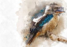 Blue feathered Kookaburra Watercolour / Mixed Media by Jeerish Blue Feather, Kingfisher, Print Poster, Love And Light, Watercolours, Bird Feathers, Tattoo Inspiration, Giclee Print, Paint Colors