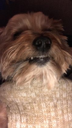 Yorkie Hairstyles, Cute Animals, Dogs, Pretty Animals, Cutest Animals, Pet Dogs, Cute Funny Animals, Doggies, Adorable Animals