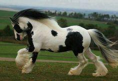 Majestic horse...