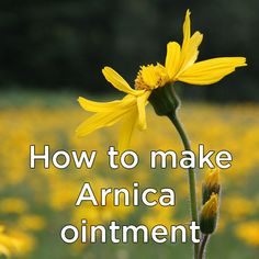 How to make Arnica ointment http://learningherbs.com/newsletter/arnica-ointment/