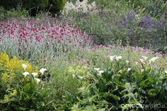 Galeria zdjęć - Ogrody angielskie - Gooderstone Water Gardens - Ogrodowisko