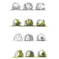 sketching tutorial course. plants and trees . Rendering Tutorial .#architecture#...  #commercialarchitecture #architecturalrendering #commercialinteriordesign #findanarchitect #architectureschools #officedesign #localarchitects #landscapearchitecture #interiordesigner