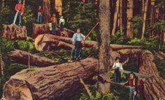 woodsman tavern: opening soon.