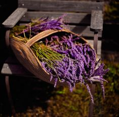 How to Grow Lavendercountryliving