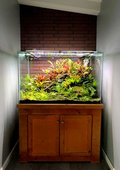 -WARNING- This initial post may contain long, boring, unnessecary descriptions of my tanks journey to becoming the terrarium you Aquarium Design, Reef Aquarium, Paludarium, Vivarium, Amazing Aquariums, Reptile Room, Dart Frogs, Moss Garden, Live Fish