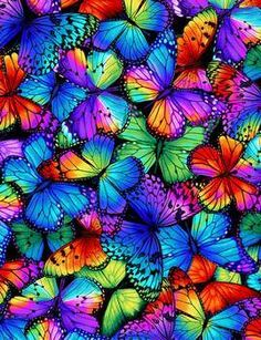 Butterfly Magic Packed Multi Bright Butterflies