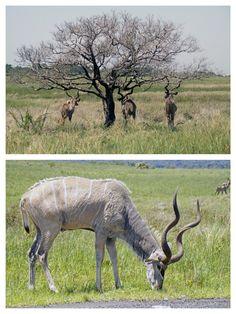 Isimangaliso Südafrika