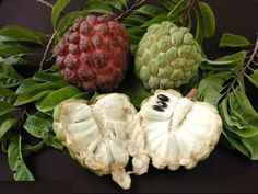 Recent research has shown that the extract of the Graviola fruit, or also known as soursop or guyabano, effectively destroys the malignant cells of 12 different cancer types. Apparently, the extract of this miraculous fruit can kill the affected cells in the case of lung, colon, liver, pancreatic, cervical, prostate, ovarian, and breast. This discovery may be of immense importance in the treatment of this deadly disease. A pathologist from the University of Nebraska found that this fruit has…