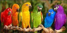 alanarama,rainbow,parrots
