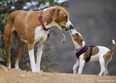 Puppy Love photography