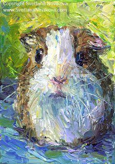 Guinea Pig - very pretty!
