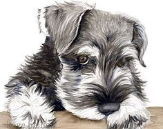 Schnauzer Art Print Set of 3 Prints Watercolor by MiaoMiaoDesign - things to paint - Hunde Miniature Schnauzer Puppies, Schnauzer Puppy, Most Popular Dog Breeds, Dog Paintings, Dog Portraits, Dog Art, Animal Drawings, Cute Dogs, Dogs And Puppies