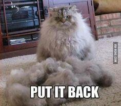 How I feel everytime I get a bad haircut...