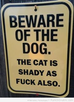 The Cat is shady...