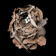 Beautifully Preserved Bird Nests From the 20th Century - My Modern Metropolis