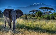 Скачать обои слон, животное, уши, бивни, хобот, раздел животные в разрешении 2048x1344