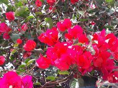 A Sense of Joy Photo L, Joy, Flowers, Plants, Glee, Being Happy, Plant, Royal Icing Flowers, Flower
