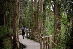 Illa de Arousa Travel Around, Exploring, Travelling, Camping, Park, World, Nature, Blog, Places To Travel