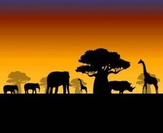 1000 images about the savannah on pinterest africans for African sunset wall mural