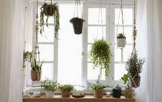 Ikea - create an indoor window garden. Includes how to make a macrame plant hanger.