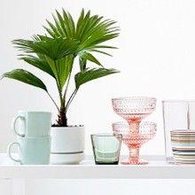 Вдохновение - Iittala.com Table, Plants, Inspiration, Design, Decor, Biblical Inspiration, Decoration, Tables, Planters