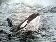 Orca killer whale drawing by Marianne Fredericks. Www.facebook.com/maritattoos www.twitter.com/maritattoos instagram: @Marianne Fredericks