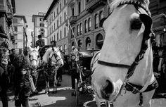 Firenze carrozze fiaccherai