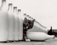 kittens kittens kittens. I WANT ALL THE KITTENS!