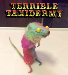 Patchwork! Terrible Taxidermy