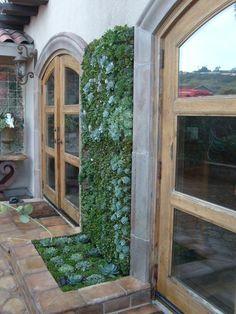 Ideas designs for vertical gardens