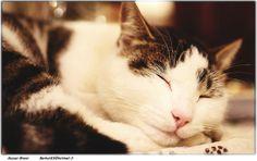 Cat by Moyan_Brenn_BE_BACK_on_10th_OCT, via Flickr