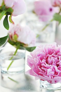 Pink Peonies. My family's first house had a small flower bed with them.